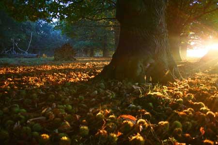 autumn_reds